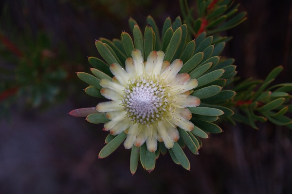 Cape Floral Region Protected Areas 1007rev
